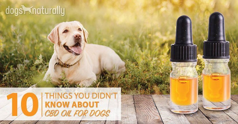 CBD-Oil-For-Dogs-Article-Post
