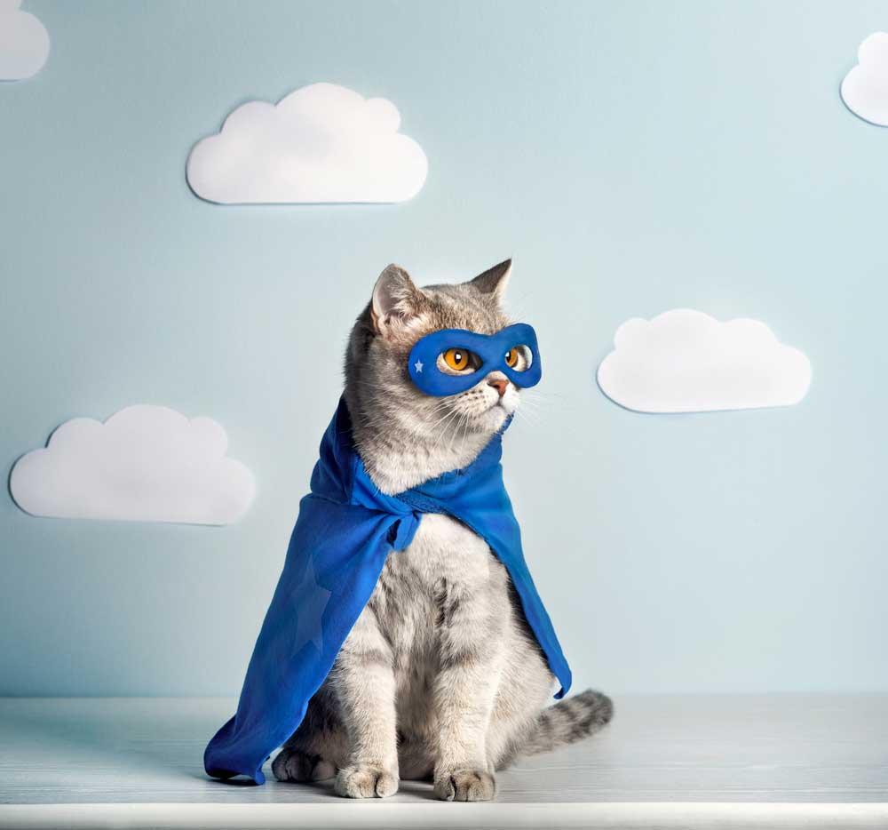 Cat-Hero1