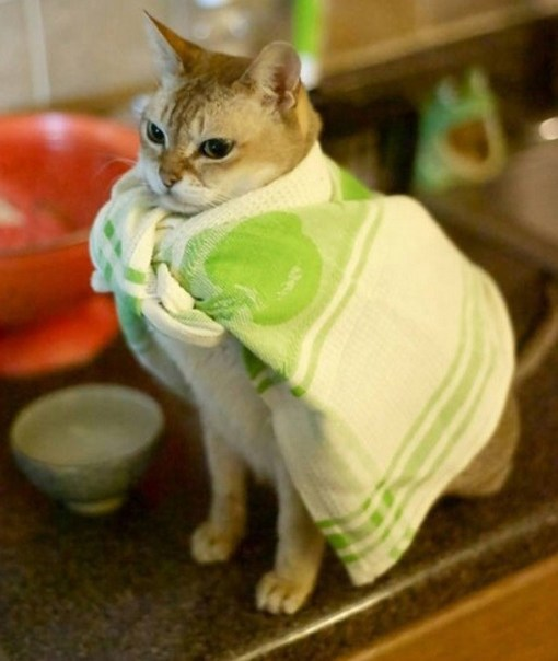 Top-10-Cats-Who-Want-To-Be-Superheroes-2