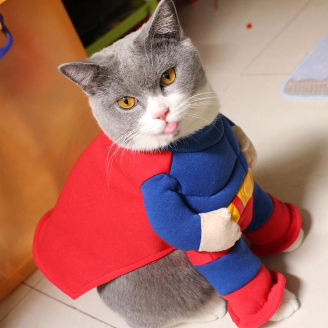 cats-in-capes14