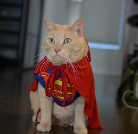 super-cat-costume_yinvu1