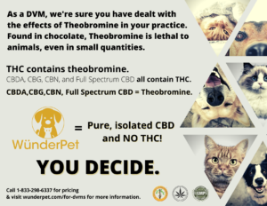 Watch Out For CBD That Could Contain Theobromine!